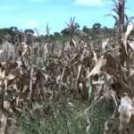 Actuar contra la sequía en el istmo