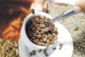 LA CALIDAD DEL CAFÉ NICA necesita ser mejor promocionada para obtener mayores precios en el mercado mundial. LA PRENSA/ ARCHIVO