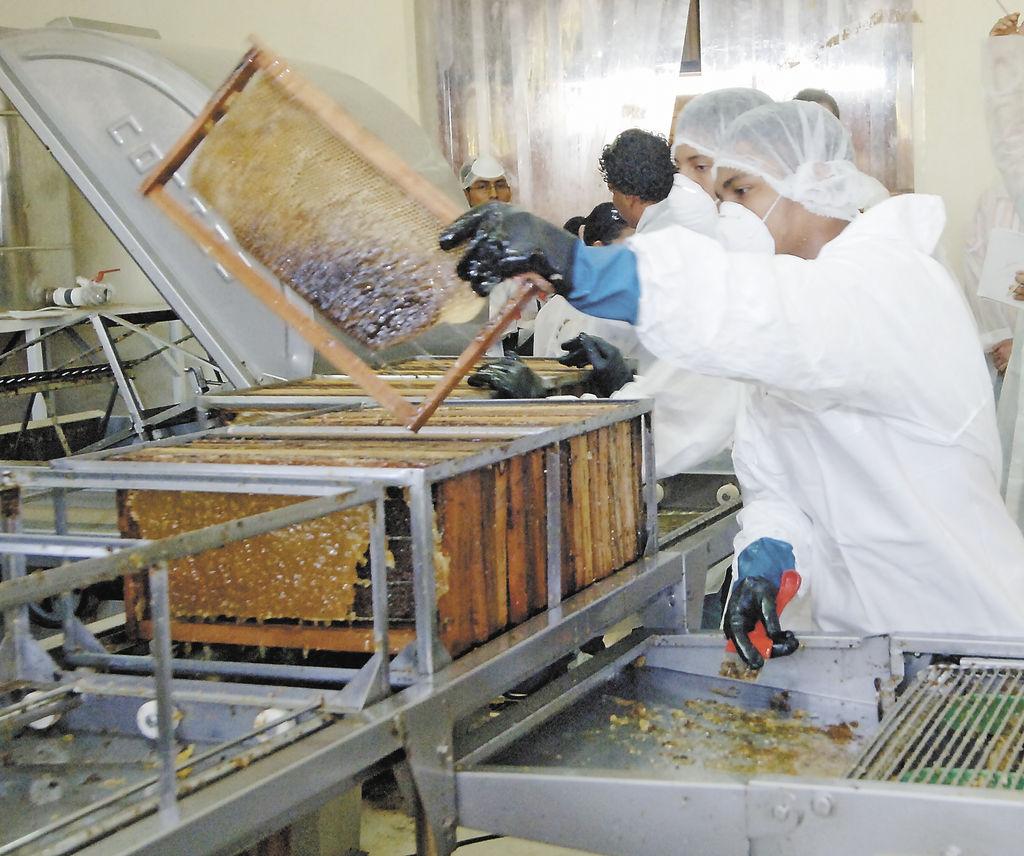 El año pasado, producto de la sequía, Ingemann Food Nicaragua sólo exportó  140  toneladas de miel, pero este año pretenden ampliar esa cifra a 200 toneladas. LA PRENSA/ U. MOLINA