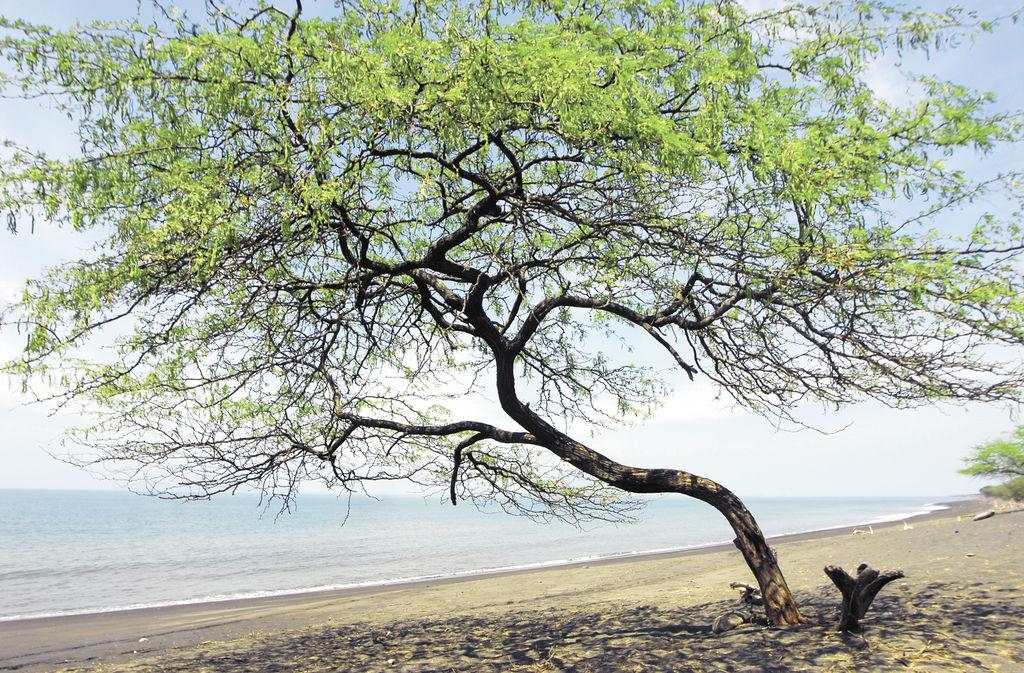 El Golfo de Fonseca es una de las regiones más olvidadas de Nicaragua. LA PRENSA/G. FLORES