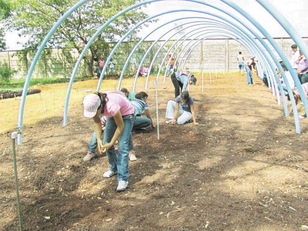 Estudiantes cultivar n 300 mil plantas la prensa for Construccion de viveros forestales