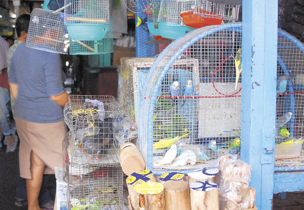 Diversos tramos ilegales de venta  de animales en peligro de extinción en el Mercado Oriental. LA PRENSA/Hector Esquivel   * La autora es especialista en Gestión de Riesgos Ambientales