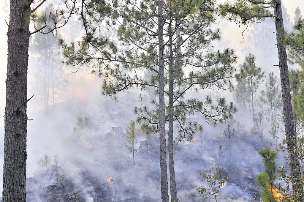 Antes de estos últimos incendios,  el fuego ha arrasado unas siete mil manzanas de bosques, según el Jefe del Ejército. LA PRENSA/G. MIRANDA