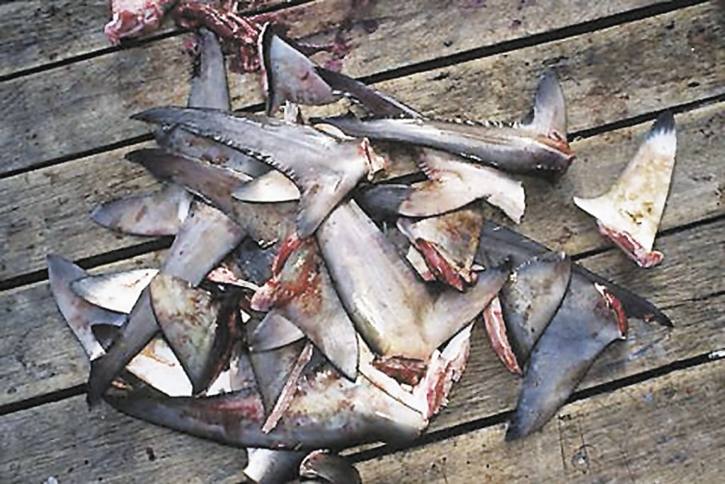 aleteo de tiburones yahoo dating