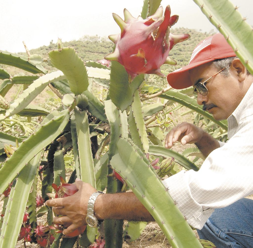 A potenciar el mercado de las frutas