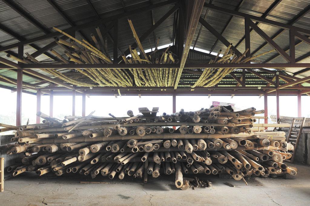 El bamb se abre paso en la raas la prensa - Reproduccion del bambu ...
