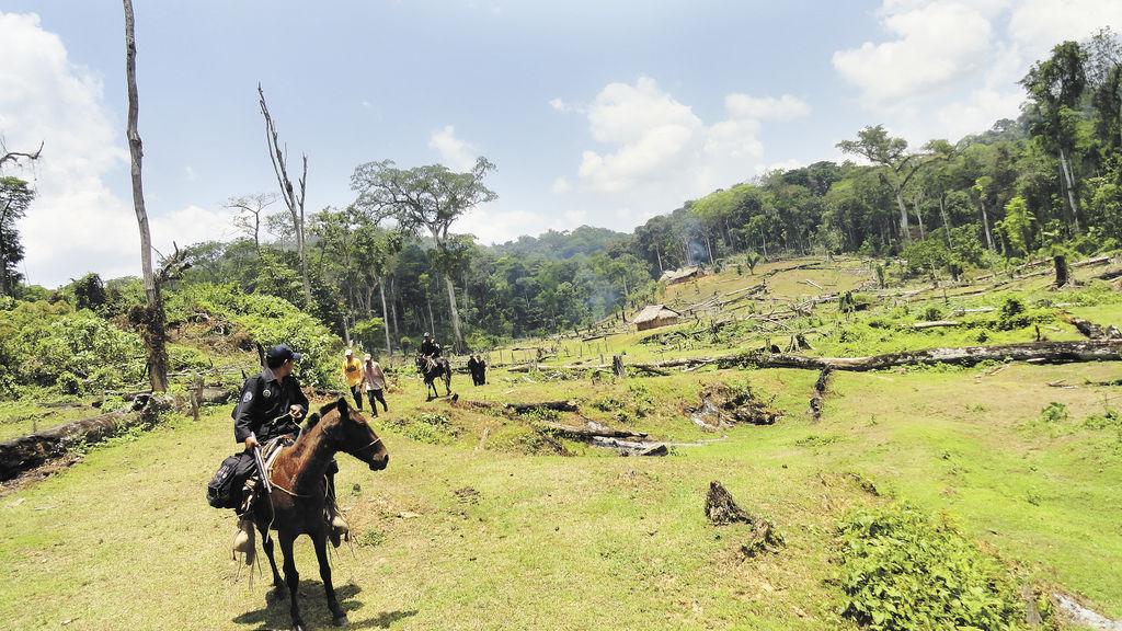 Para esta semana está previsto que llegue al país una representación de la Unesco a evaluar la situación que atraviesa la Reserva de Biosfera Bosawas. LAPRENSA /JOSÉ GARTH