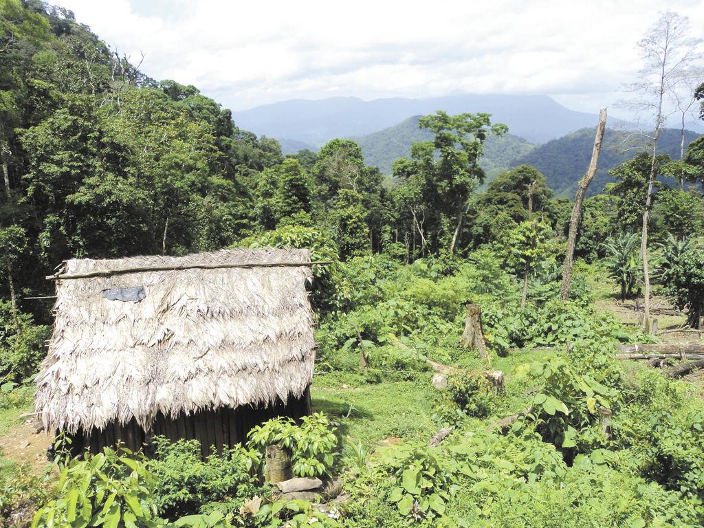 La RAAN representa la mayor área de bosques tropicales en Centroamérica,  aproximadamente el 74.4 por ciento de los 32,159 kilómetros cuadrados de la RAAN se encuentran cubiertos con bosques. LA PRENSA/ ARCHIVO