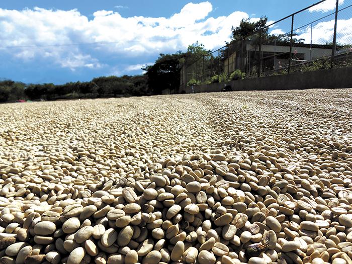 Exportación de café cerca del récord