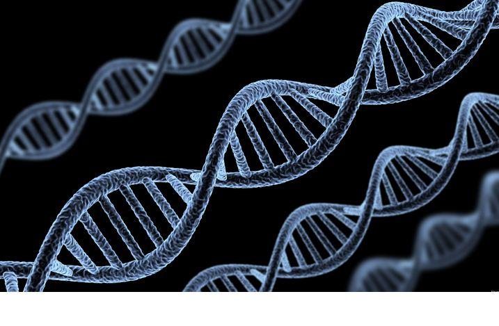 Localizan gen que favorece resistencia cáncer de próstata