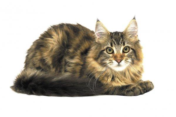gatos edad: