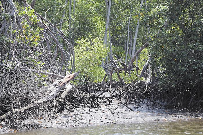 Marena dice que no da permiso para talar en el área protegida,  pero los ambientalistas aseguran que esto se hace. LA PRENSA/E.LÓPEZ