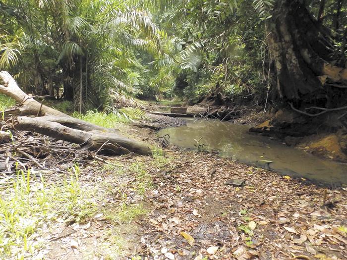 Pobladores de Los Guatuzos  señalan que el acaparamiento de agua del lado tico con fines agrícolas es lo que tiene al río Papaturro seco.  LA PRENSA/ CORTESÍA AMIGOS DE LA TIERRA ESPAÑA
