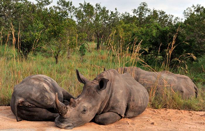 Extinción de los grandes animales acelera el cambio climático