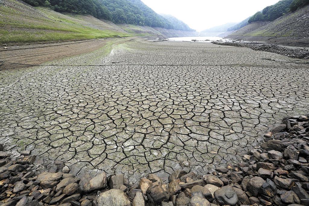 El planeta enfrenta la sexta extinción