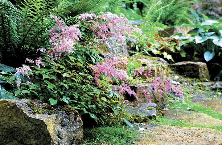 Llene de vida su jard n con rboles y plantas la prensa for Arboles de jardin que den sombra