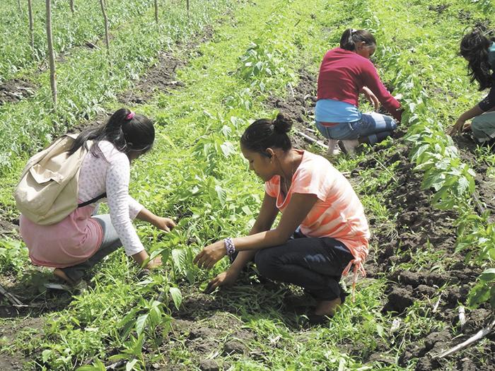 Tierras de Nicaragua son mal utilizadas