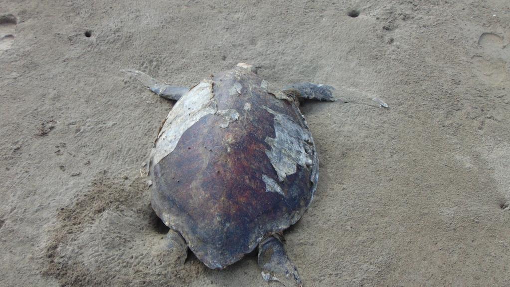 Imagen de la Procuraduría Federal de Protección al Ambiente de