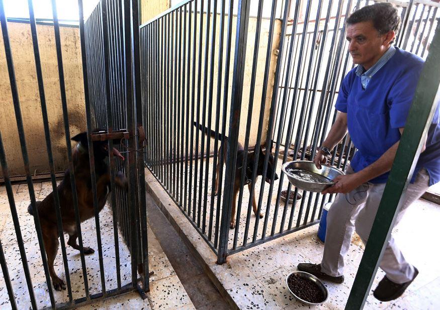 Cuando estalló la revolución libia en el 2011, cientos de extranjeros le pidieron a Jalal Kaal que rescatara a sus mascotas. LA PRENSA/AFP/MAHMUD TURKIA