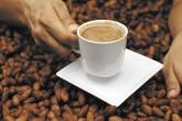 Elegirán el mejor cacao del país