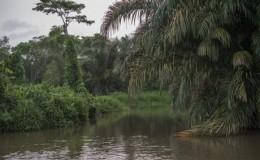 Vista de la zona en disputa  entre Nicaragua y Costa Rica, en abril de 2015, meses antes que la CIJ fallara a favor del país vecino. LA PRENSA/ JORGE TORRES LA PRENSA/ JORGE TORRES