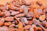 Cacao nicaragüense brilla en el exterior