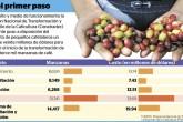 Productores de café que  no cumplan  quedarán excluidos