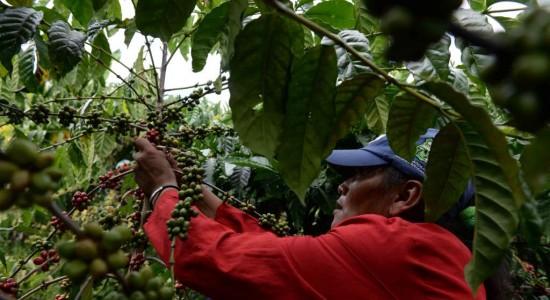 Adiós normativa salarial para el café