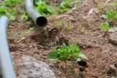 Analizan reforma en Ley General de Aguas Nacionales en el uso de riego