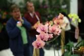 Orquídeas, el termómetro de la biodiversidad