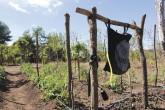 Alerta roja por sequía en Haití y el corredor seco de  Centroamérica