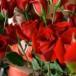 Rosas rojas de Ecuador esperan a los enamorados