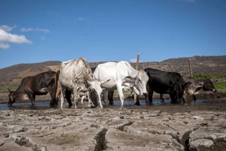 Sequía y escasez de agua inquietan a la Ganadería