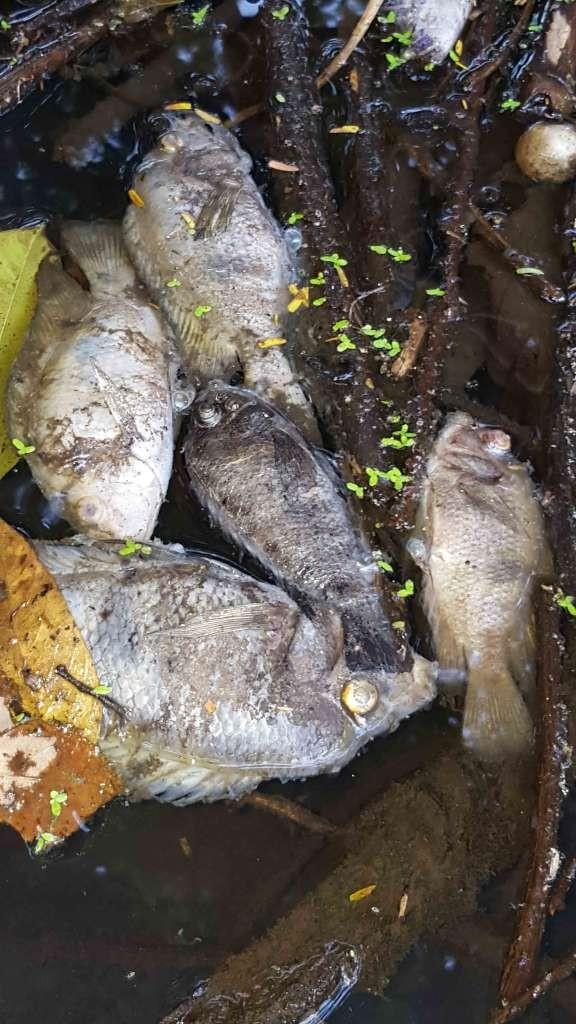 Viacrucis ecol gico en granada y mortandad de peces en for Pozos para peces