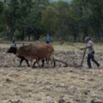 Nadie pide subsidio que otorga Ley de granos básicos