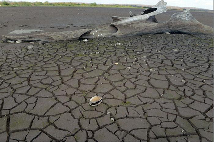 Sardinas y almejas de playa han muerto encalladas en las costas del lago Cocibolca que se secó unos 10 kilómetros en la comarca El Potrerillo de Acoyapa, Chontales.