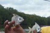 Mueren peces y estero se seca en San Juan del Sur