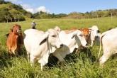 """Seguirán las """"vacas flacas"""""""