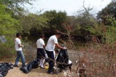 Peces siguen muriendo en San Juan del Sur