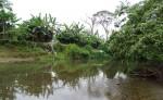 El río Hormiguero  podría  ser afectado por la invasión y deforestación. LA PRENSA/J. GARTH