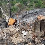 Inafor multará a depredadores de bosque de Nueva Guinea