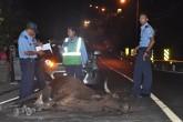 Vaca ocasiona accidente de tránsito en Boaco