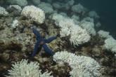 Corales de Australia mueren