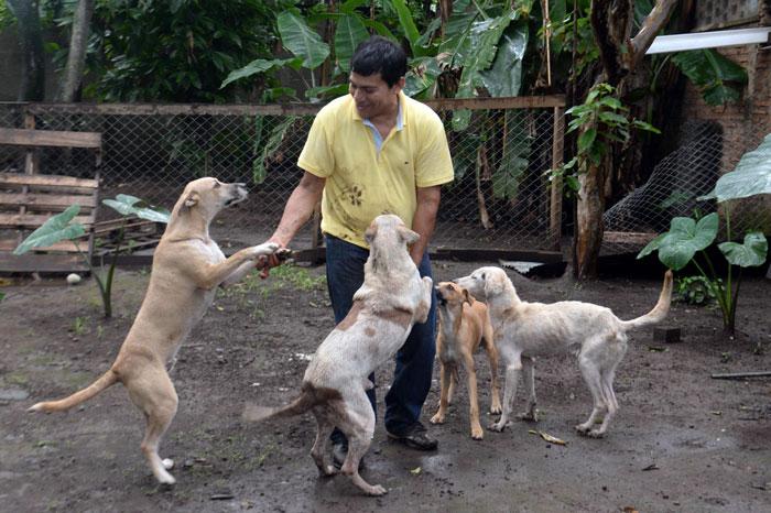 En la casa hogar lucito se rescatan perros y gatos de diferentes edades que son alimentados - La casa de la mascota ...