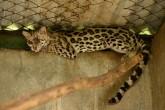 """El Zoológico, en riesgo de """"extinción"""""""
