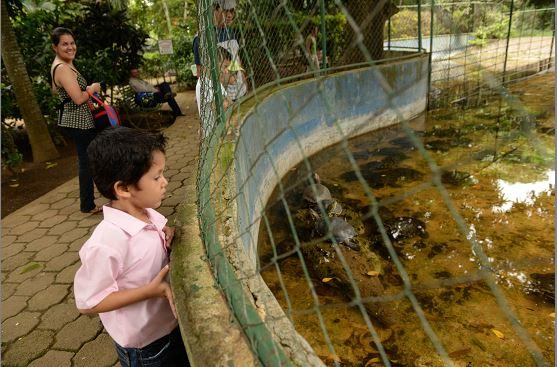En el Zoológico las personas, especialmente los niños, pueden ver a los animales en vivo y no disecados o en fotos, dice el trabajador del Zoológico Nacional, Germán Mercado. LA PRENSA/ URIEL MOLINA