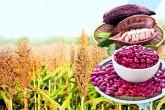 """""""Cultivamos"""" para impulsar el agro en Nicaragua"""