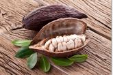 Centroamérica debe aprovechar potencial del cacao
