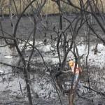 Puma Energy debe restaurar ecosistema en Puerto Sandino
