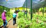 Un mariposario se encuentra entre las opciones que ofrece el Centro Turístico Rural Comunitario La Suana. LA PRENSA/L.E. MARTÍNEZ M.